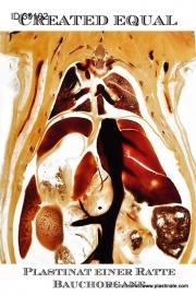 Anatomie von Ratte / Nagetier vergleichend