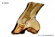 coffin_bone_deformation_hoof_patholology_horse_equine_anatomy