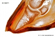 laminitis_rotation_perforation_sole_hoof_equine