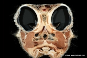 ostrich_head_anatomy2