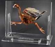 Roadrunner Trophy Running Award