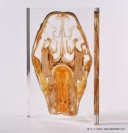 equine_head_section_anatomy