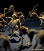 dinosaurier_vogel_anatomy_plastination
